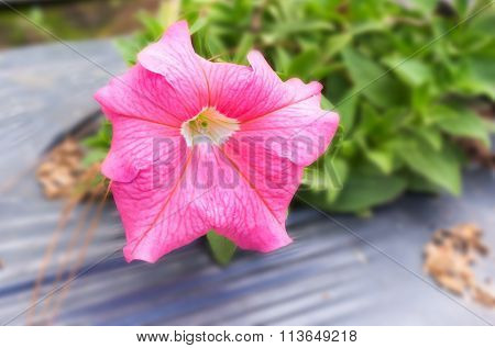 Pink flowers on blurred background.