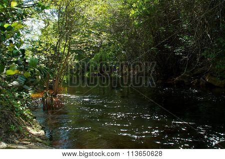 Imperial River Bonita Springs Florida Flowing Towards Viewer