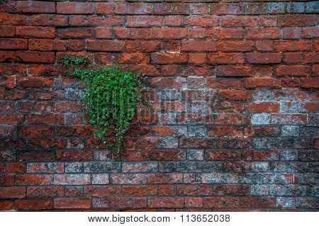 Plant in the Wall