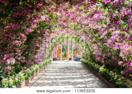 Blur Pink Flower Archway