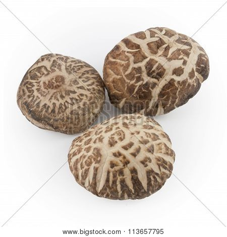 Dried Shiitake Mushrooms Isolated