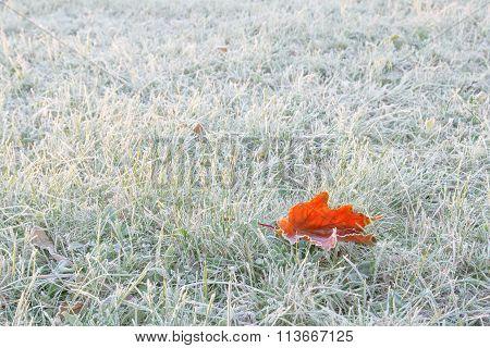 red frozen leaf