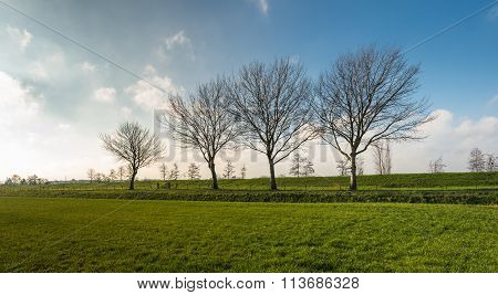 Row Of Trees Beside A Dike