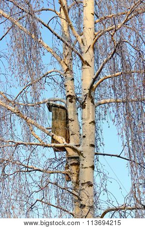 birch and birdhouse