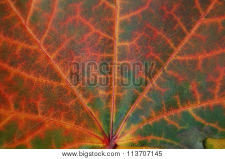 Leaf texture in autumn.
