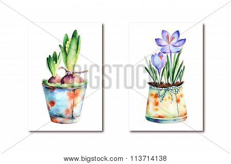 2 High quality painted watercolor- ?rocus and hyacinth in shabby old pots
