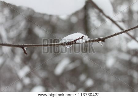 Snow into water and flows down from the tree