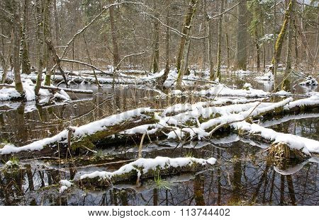 Winter Snowy Old Forest With Water