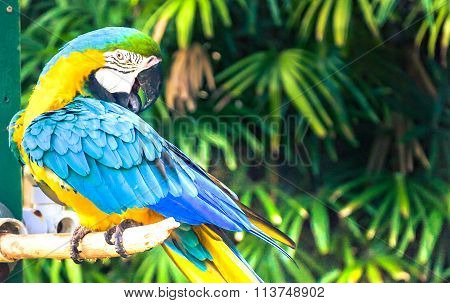 The Colorful Macaw Bird On The Branch