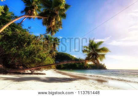 Wild tropical beach with soft golden light, Seychelles