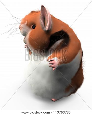 Hamster Happy Pose