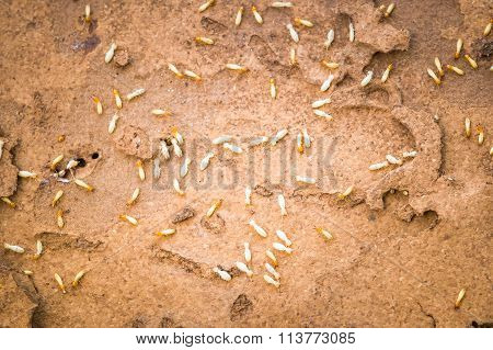 Termites Swarm