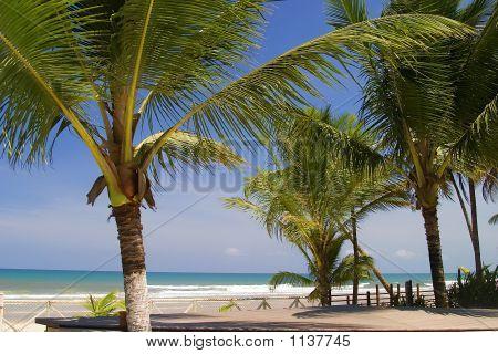 Palm On Paradise