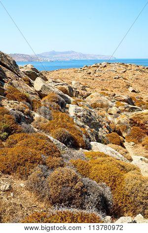 Bush   In Delos Greece The Historycal Acropolis And