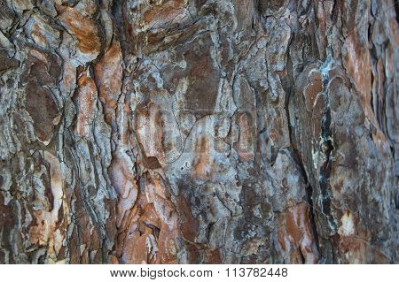 Abstract Wood Texture Bark.