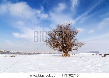 Tree On Winter Field And Blue Sky