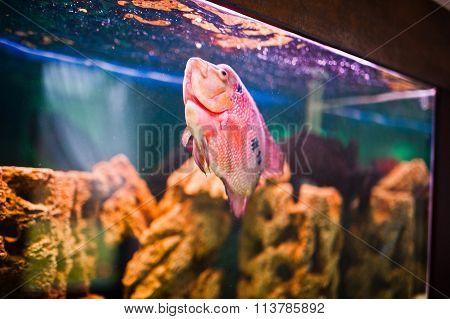 Funny Aquarium Fish With Bubbles