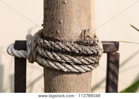 Old Rope On Tree