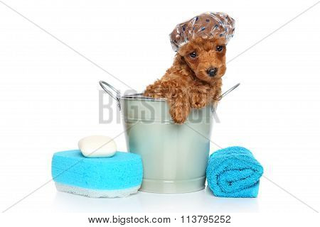 Bath Theme. Poodle Puppy