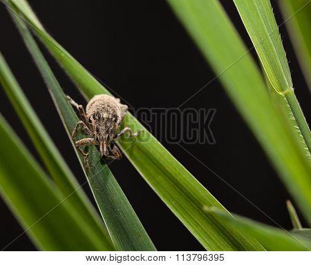 Beetle Portrait In Grass