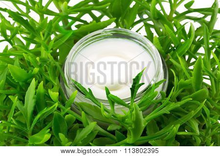 Container Of Cream In Green Leaves