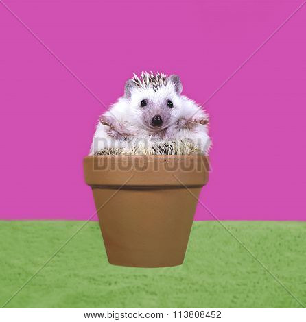 Cute Hedgehog Sitting in Flower Pot