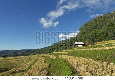View Of Rice Farm, Cloudy Sky By Local People In Mountain, Northern Part Of Thailand
