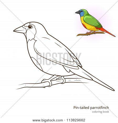 Pin tailed parrotfinch bird coloring book vector