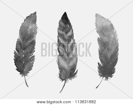 Set Of Grey Feathers Isolated On White Background