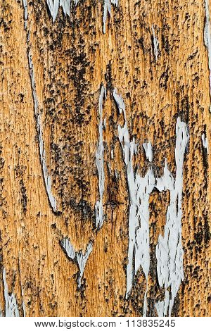 Wood texture with natural patterns and old pain
