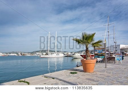 Harbor With Palm Tree