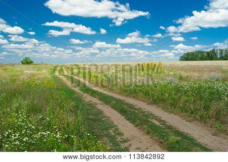 Earth road in flowering Ukranian steppe