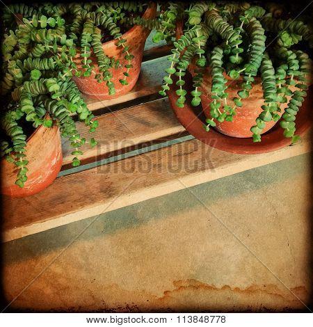Green Plants Vintage Style