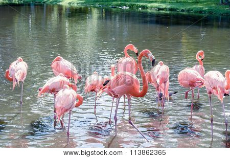 The Pink Flamingo Bird On The Lake In The Park