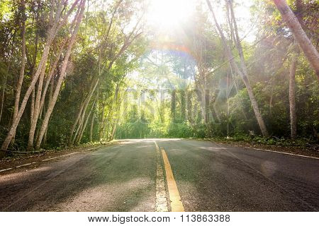 Landscape Shot.  Desolate Road In The Forrest With Sun Rays Illumining