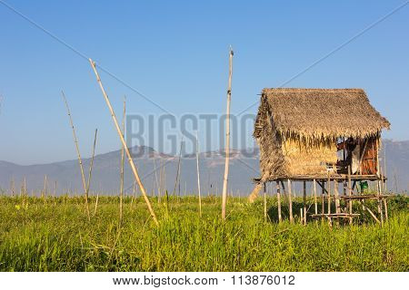 Cottage, Paddy Field, Rice