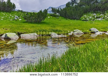 Small river and green grass, Pirin Mountain