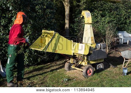 Gardener Loading Wood Chipper With Cutted Boughs