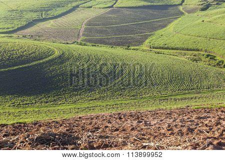 Farming Crop Landscape