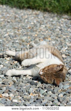 Cat sleeping in the outdoor.