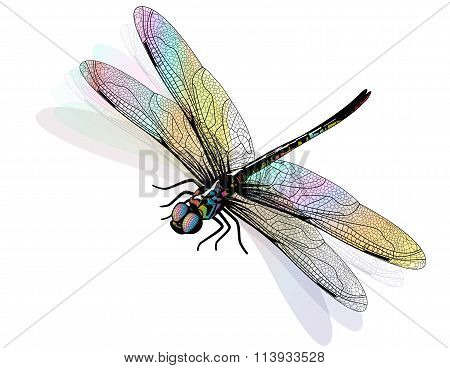 Vector dragonfly isolated and colorful. EPS10
