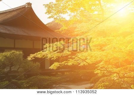 Green maple trees and Japanese-style house in the Japanese garden  of Ginkakuji Temple.