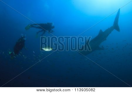 Scuba divers and whale shark
