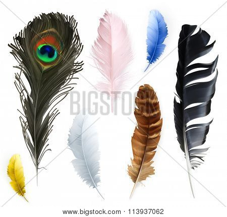 Feathers, vector icons set