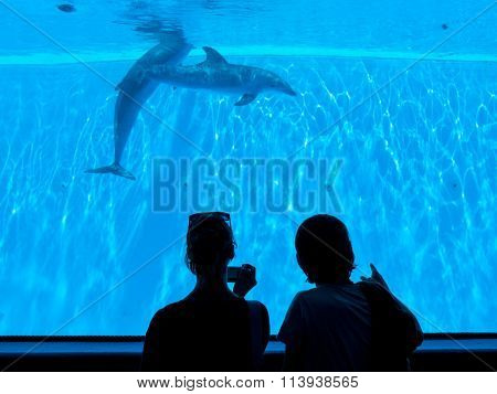 People enjoying watching dolphins