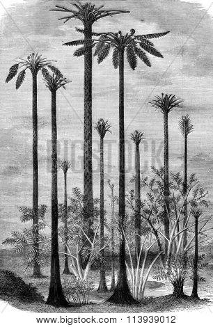 Landscapes of the primitive world, vintage engraved illustration. Magasin Pittoresque 1878.