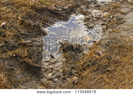 Mud Puddle And Wet Leaves