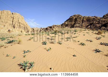 Fresh Plants On Desert Sand, Jordan