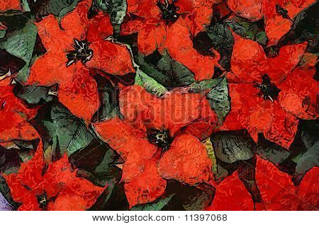 Red Poinsettia Flowers with leaves PaintingEPS Vector