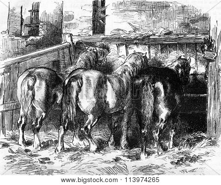 Percheron horses in the stable, vintage engraved illustration. Magasin Pittoresque 1857.